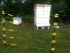 Summer bees3
